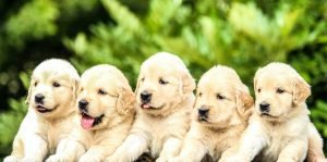 10 Important Tips to Training Your Puppies